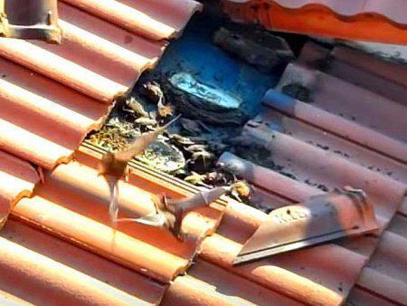 Murciélagos en tejados